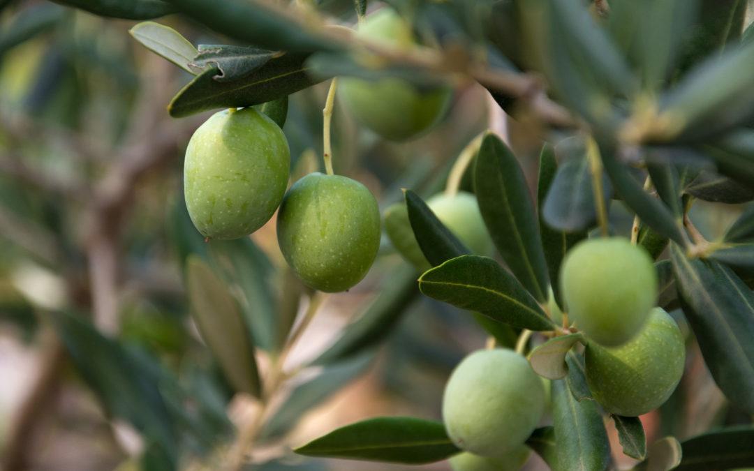 Poboljšajte kvalitetu tla u maslinicima i vinogradima pomoću peletiranog organskog gnojiva