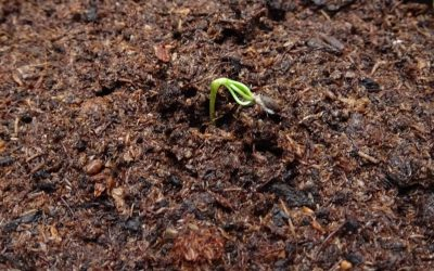 Potaknite organski život tla korištenjem Unimer gnojiva u kombinaciji s Mikorizom te ostvarite potporu u IAKS mjeri 10.1.15