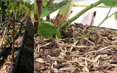 BVB TopClean organski pokrivač koji sprječava rast mahovine i korova